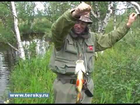 Рыбалка на Кольском. Крупный окунь.