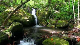 Music to RELAX to FEEL GOOD - WATER - BIRD - NATURE SOUNDS
