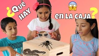 ¿QUÉ HAY EN LA CAJA? / WHAT'S IN THE BOX CHALLENGE ♥️ - Gibby