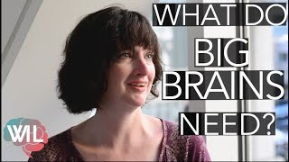 Growing a Big Brain with Meat | Amber O'Hearn