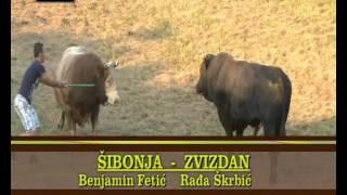 SIBONJA-ZVIZDAN Grmec 2014 cetvrtfinale