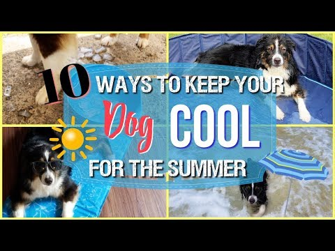 How to Keep Your Dog Safe, Healthy, and Clean All Summer Long