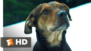 A Dog's Way Home (2018) - The Avalanche Scene (5/10) | Movieclips