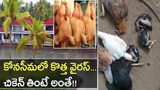 New Virus creates panic in Andhra Pradesh..