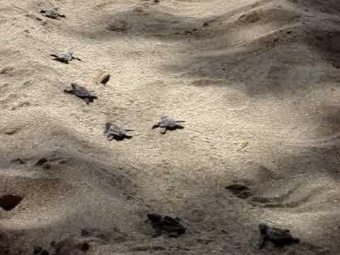 turtlesrunning