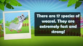 ZooCraft: Fun Facts Time! Vol. 25 (Weasel)