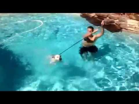 Scottsdale dog training ''k9katelynn'' teaches ''Sam'' how to swim in Scottsdale,az!