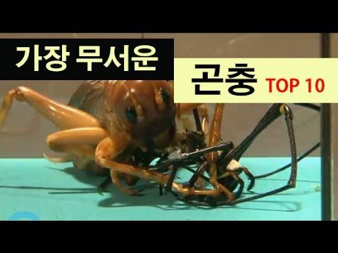 (랭킹박스) 세계에서 가장 무서운 곤충 TOP 10