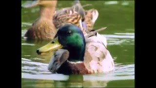 Baby Einstein's Baby Dolittle - Neighborhood Animals Part 5