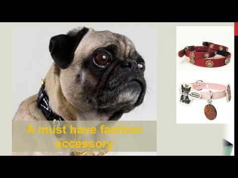 Discount Dog Supplies Store Black Friday Cyber Monday Offer
