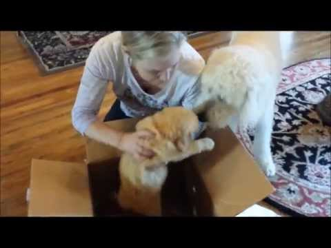 Dog Gets A Puppy For His Birthday