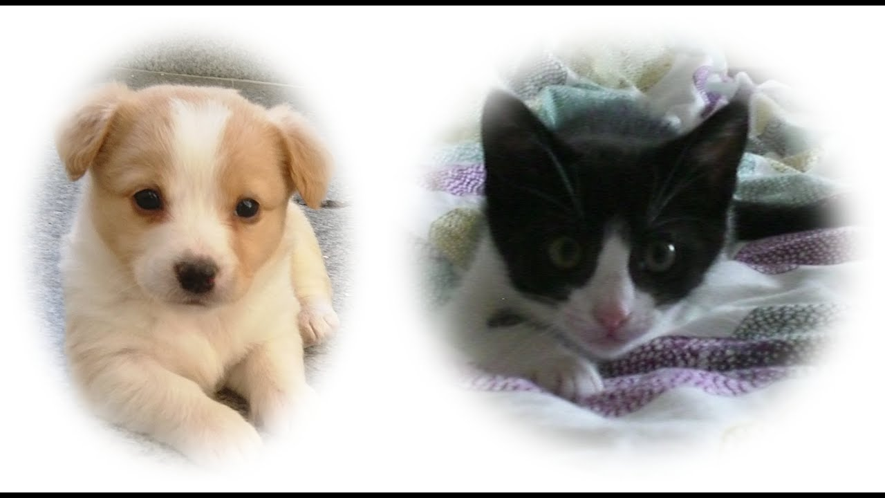 Kitten and Puppy Playing Together - Very Funny - YouTube