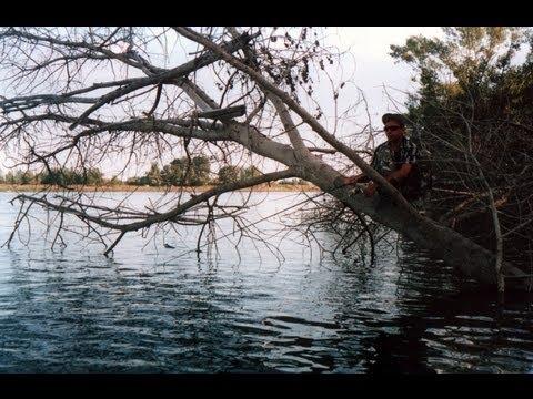 Ахтуба - На поваленных деревьях (в коряжнике)
