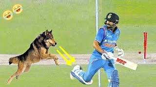 #10 craziest animal attacks in Cricket | dog attacks | Cricket videos | funny videos for kids |