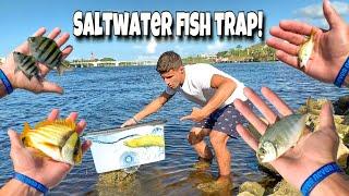 Fish Trap Catches AQUARIUM FISH!!