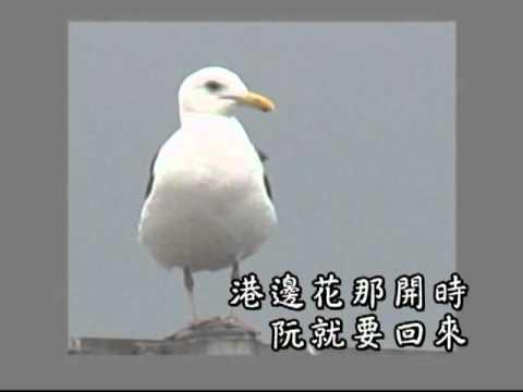 【漂、泊 台灣歌】-