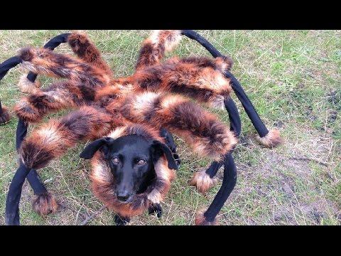 Mutant Giant Spider Attack Dog Prank!