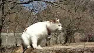 かご猫42