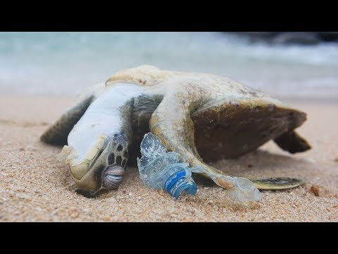 Why We Need to Stop Plastic Pollution in Our Oceans FOR GOOD