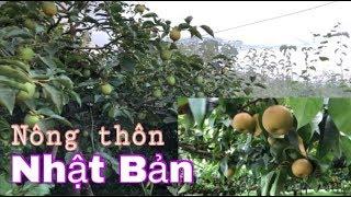 Đường nông thôn Nhật trái cây rất nhiều - Cuộc Sống Nhật Bản 213