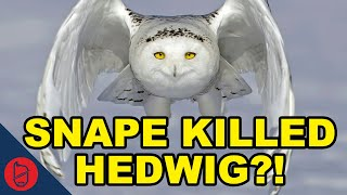 Harry Potter Theory: Snape Killed Hedwig?!