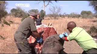 South Africa's Kruger National Park Faces Challenges on Poachers