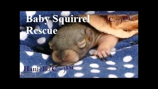 Baby Squirrel Rescue: will mama squirrel return?