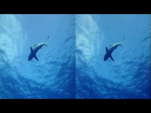 3net Sharks Open 3D Video
