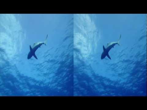3net Sharks Open 3D Video