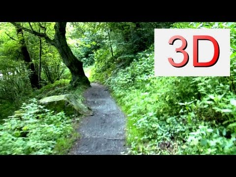 3D Video: WALKING River & Forest #2