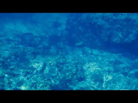 Musical Bridge and Final Dive at Cocos Island