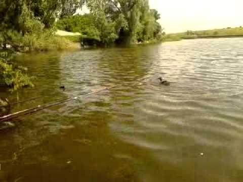 Случай на рыбалке :)