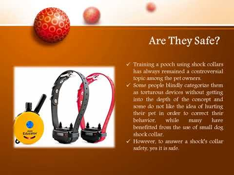 Small Dog Shock Collar – Are They Safe? Explore!