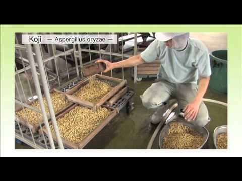 Miso of the manufacturing process