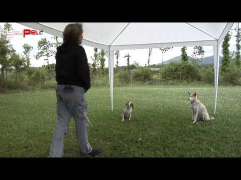 Insegnamo al cane il comando Resta