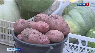 Цена на молодой картофель бьет все рекорды