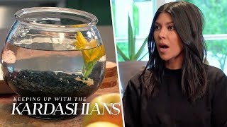 Kourtney Overstays At Kendall's And Almost Murders Her Fish | KUWTK | E!
