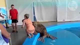 حيوان فقمة البحر يداعب فتاة ترتدي ملابس البحر
