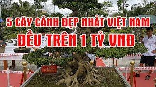 bonsai tree - 5 Cây Cảnh Đẹp Nhất Việt Nam Toàn Trên 1 Tỷ Đồng
