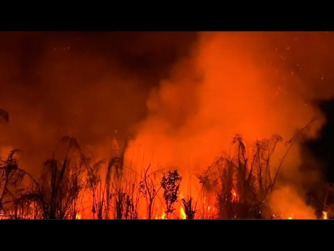 Businesses fight back over Amazon forest fires