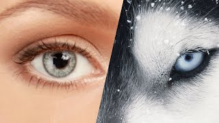 QUIZ: What Animal's Eyesight Do You Have (Part 1) [No Voice]