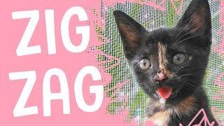 MEET ZIG ZAG - The Happiest Kitten Ever!