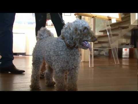 Duke's Doggie Rescue Birthday Party - Cute Dogs