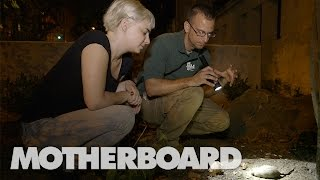 Exploring New York's Rattiest Park with a Rodentologist
