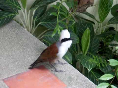 Bird Gay 51
