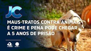 Maus-tratos contra animais é crime e pena pode chegar a 5 anos de prisão