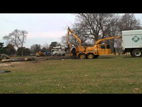 Arbor Masters Stump Grinding - Tree Drop Time Lapse