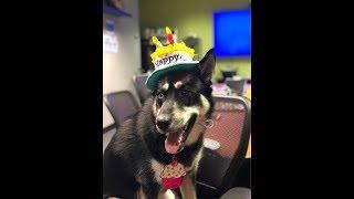 Maya's 1st Birthday at ThinkGeek