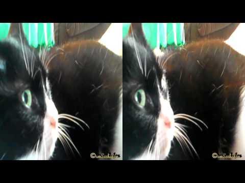 3d stereoscopic video Side by Side cuddle cat kitty kitten Katze Kätzchen kuscheln