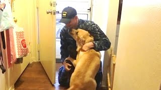 Dogs Welcoming Soldiers Home Compilation 2017 [NEW]